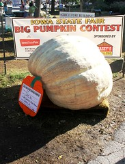 Really Big Pumpkin