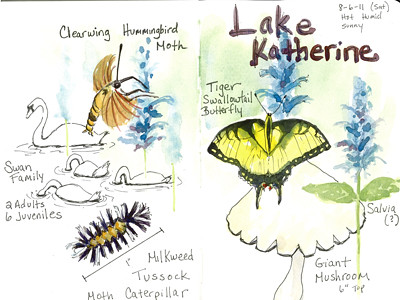 20110806_lake_katherine_sketch