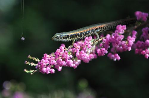 季軍:花与蛇 方宾摄