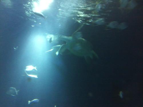 faraway turtle