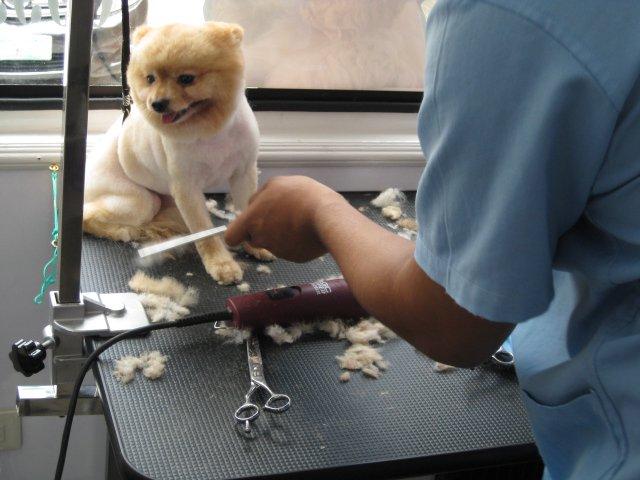 clean paws mobile pet salon