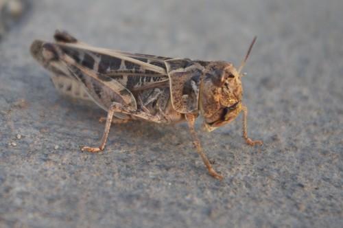 09.01.2011 Grasshopper