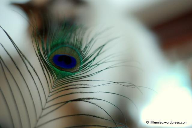 lotus peacock 9-11-2011 4-23-01 PM