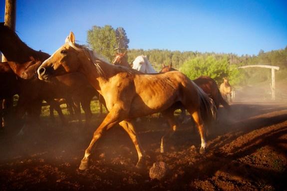 Black Mountain Colorado Dude Ranch horse running