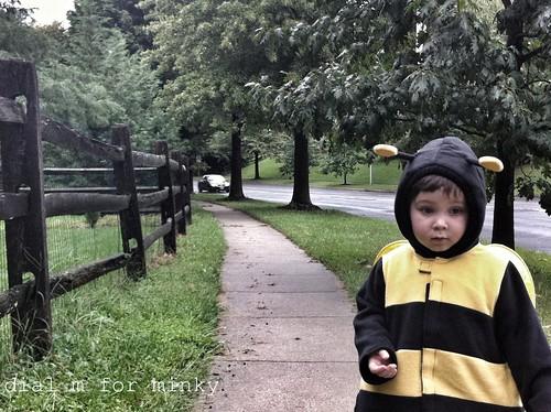Bee walk