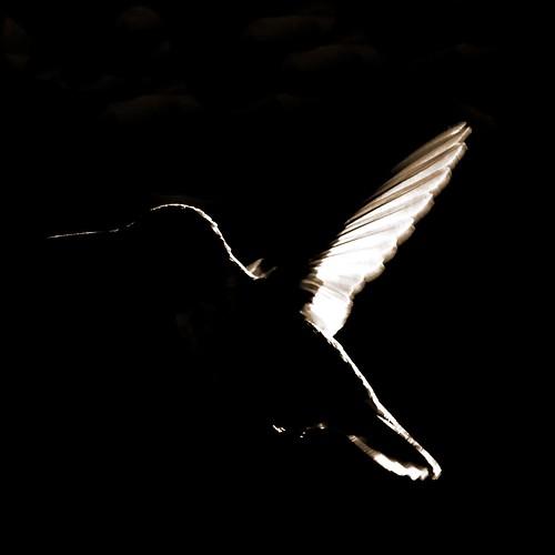 Hummingbird Essentials