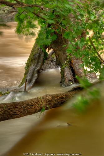 110828 Struble Trail - Hobbit House Tree