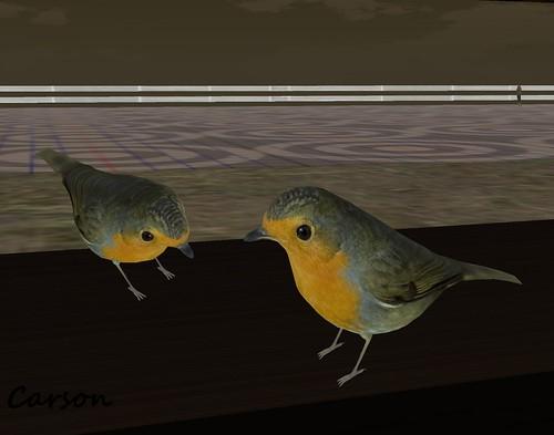 La Flat - Birds for your Window