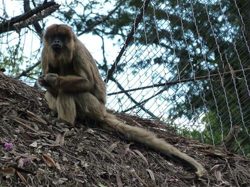 Free monkey