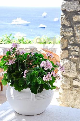 flori - Mykonos-1-2