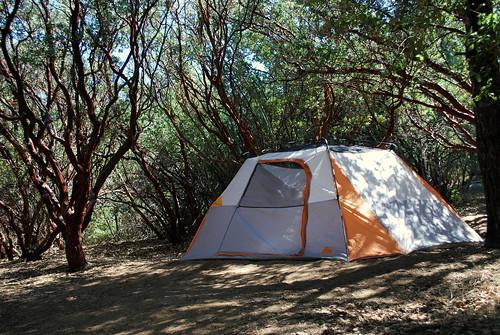 tent under the manzanitas ♥
