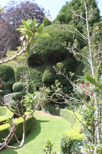 20110805_IMG_1592_topiary-face