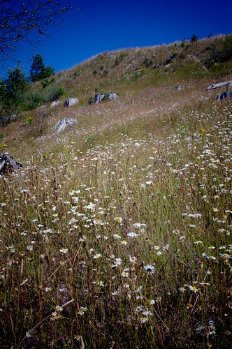 Very dry meadow