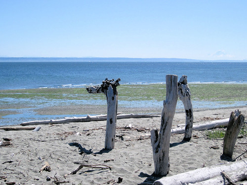 Driftwood Monster at Point No Point Park