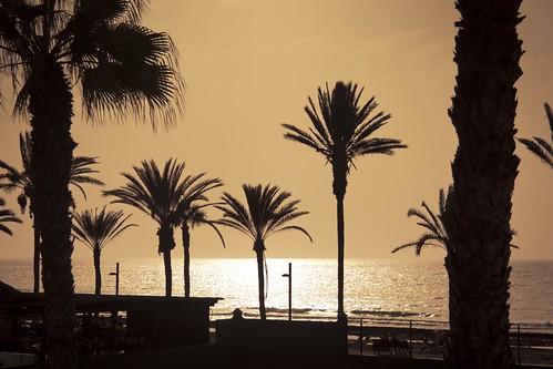 Palm Tree Invasion (La Planète des Palmiers) - Tenerife, 2011 - Photo : Gilderic