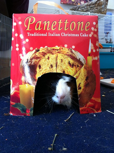 Casa para cobayas hecha con una caja de Panettone