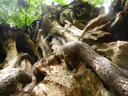 Roots on Roots... Tree on Tree