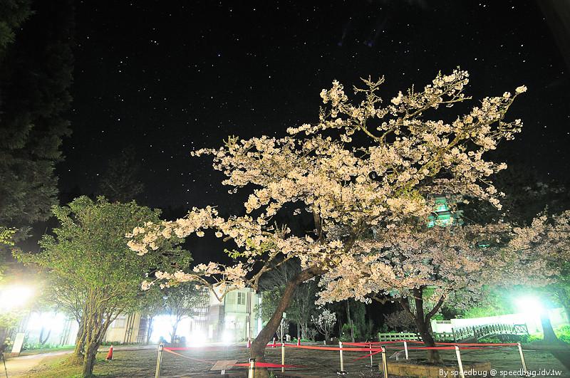 阿里山櫻花季5