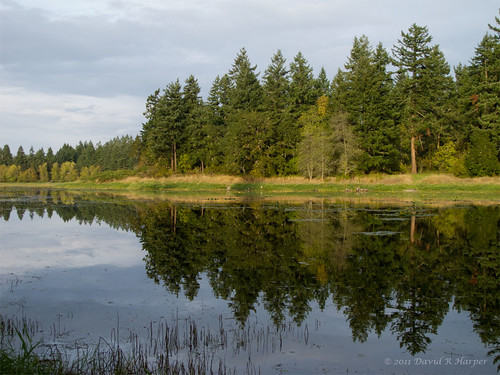 Day 285 :: 365 ..::.. Reflection on the Lake by Echo9er