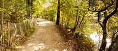 Le chemin le long de l'étang