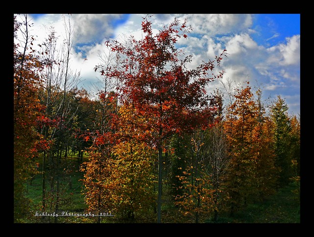 304/365 Golden Autumn II
