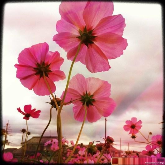 2011-11-05 at 01.29.49_edited-1