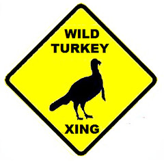 Turkey Terror Stalks the Suburbs