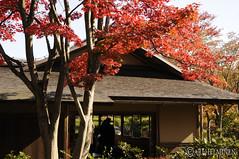 Shōwa Kinen Park, 昭和記念公園