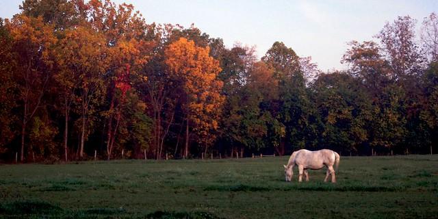 Morning Pasture 1