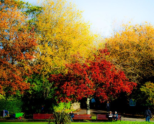 Autumn colours in the Green