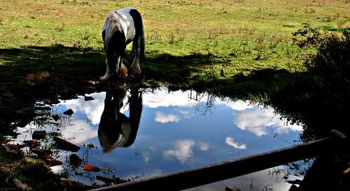 Thornton Reservoir by ShellieMM