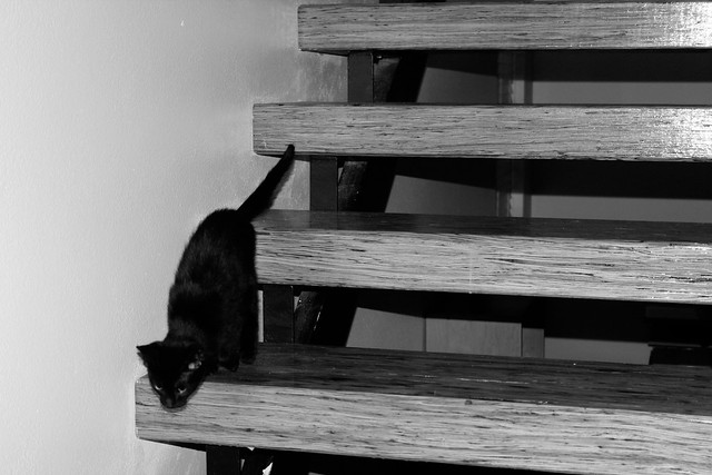 Kittehs on stairs