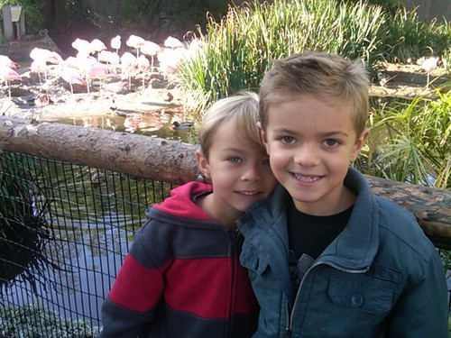 boys at wild animal park