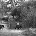 Paso Robles Horse Ranch 15