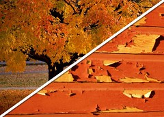 It's Time To Prepare; Fall Colors and Peeling Paint FHA, USDA, VA Appraisal Issues