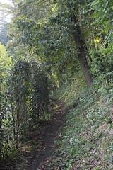 三保市民の森(新観察路)(Miho Community Woods)