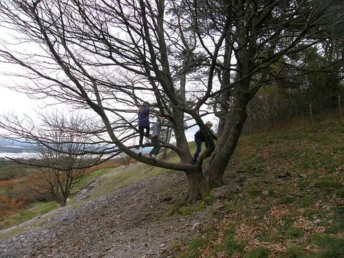 Arnside Knott tree climbing