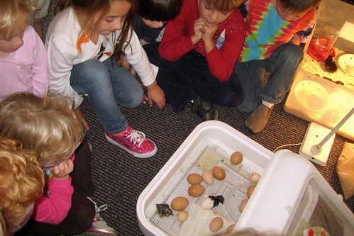 Chicks Hatching at Preschool