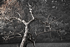 Le vieux tronc