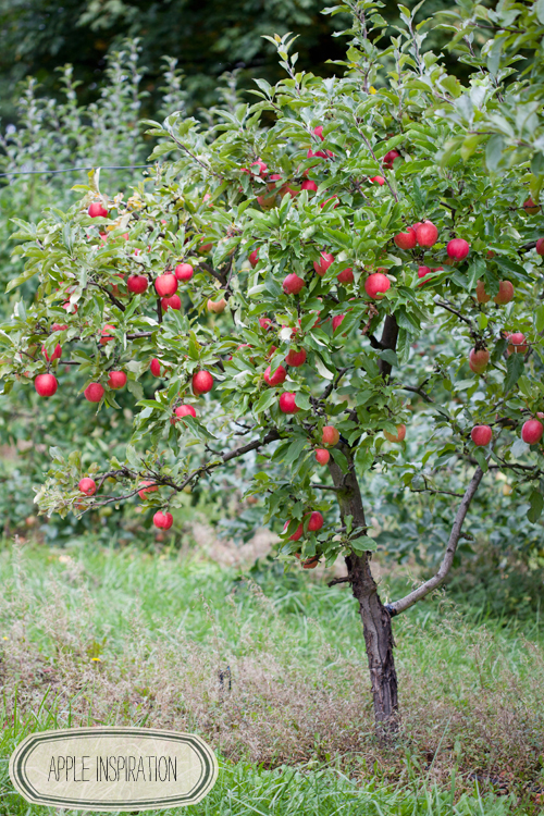 Orchard Inspiration