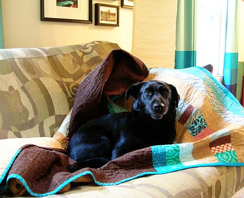 Simon in his quilt nest