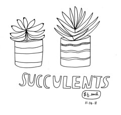 11.16.11 / Succulents