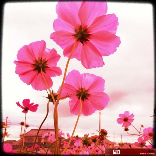2011-11-05 at 01.29.43_edited-1
