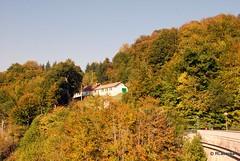 El bosque encantado: Irati en otoño