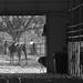 Paso Robles Horse Ranch 2