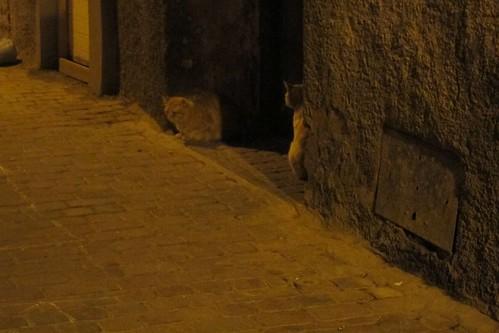 cat Marrakech Morocco