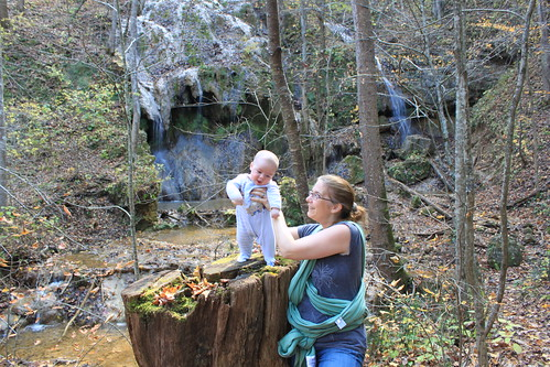 Falls Ridge - October 2011 - Sagan Stands on the Falls Ridge Stump 1