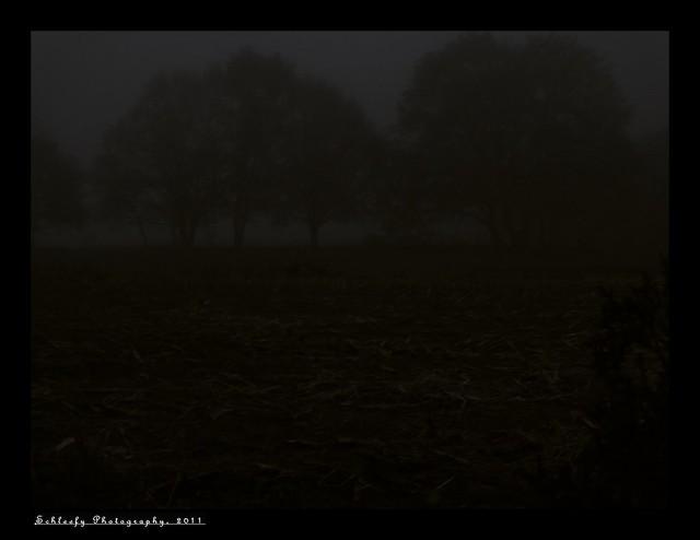 #317/365 The Fog...