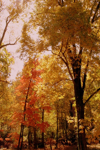 Southern Illinois Autumn