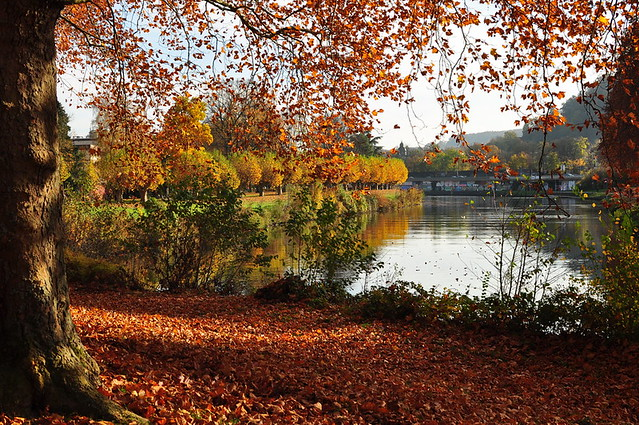 Autumn Week 2011 – 5